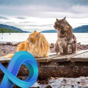 Artémis et Apollo sont de très gros chats