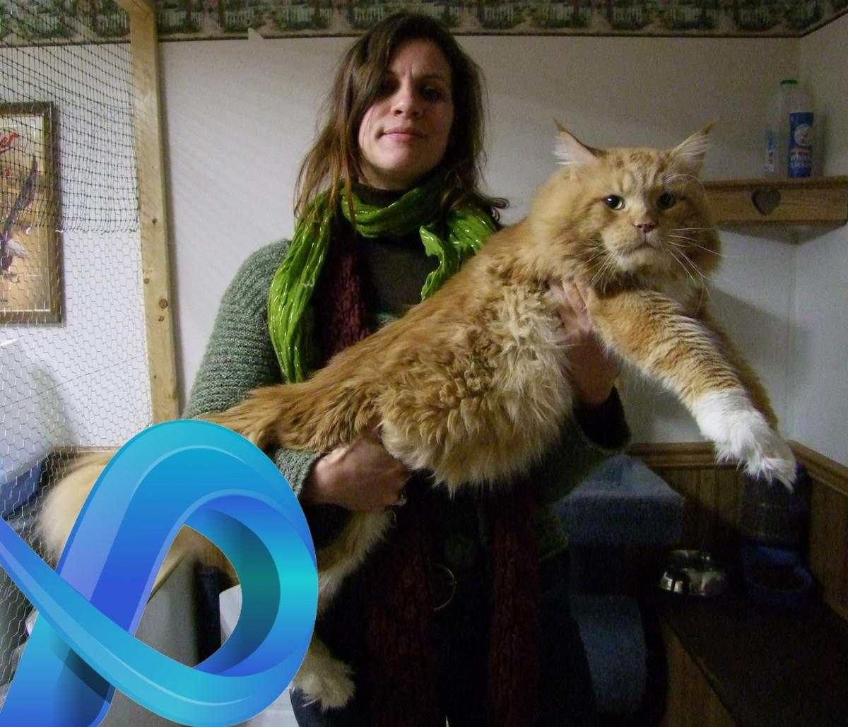 Nous avons rencontré le plus gros chat du monde !